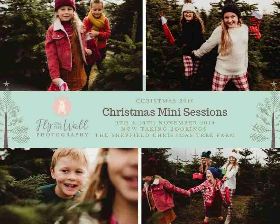 Photoshoot at Sheffield Christmas Tree Farm